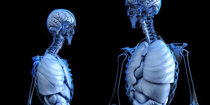 男女の人体模型