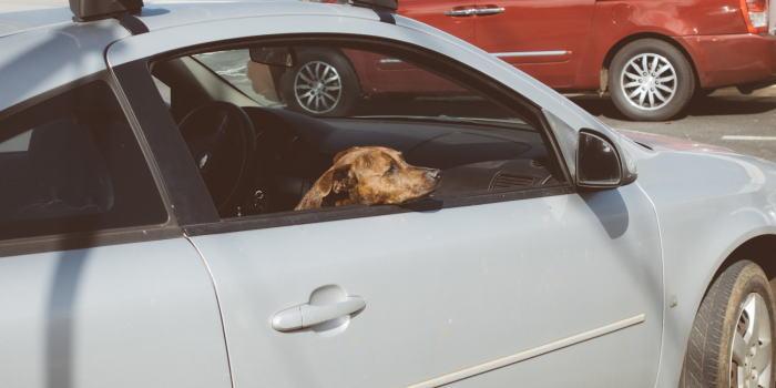 吸った後の車の匂い