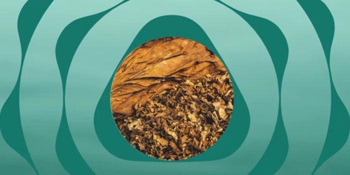 2021年10月に値上げのテリアのヒートスティック:メンソールタバコ全3種類